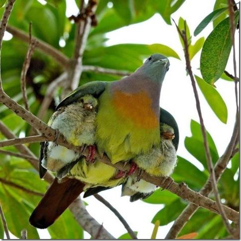 mamaandbabybirds